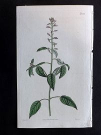 William Curtis 1820 Antique Botanical Print. Enchanter's Nightshade Cuphea 2201